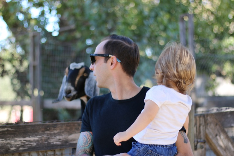 Checking out the farm animals